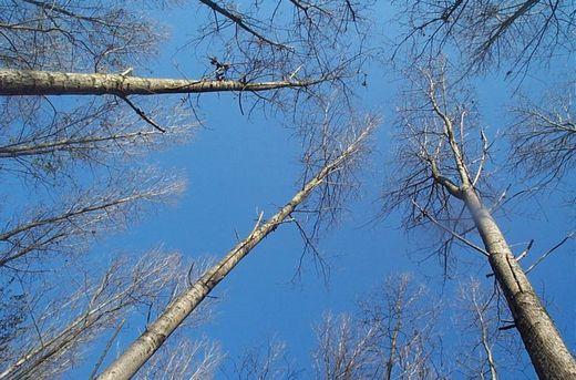 Trees_2789_2